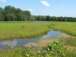 Peoria-Wightman-Lake-Wetland-Management-Unit1