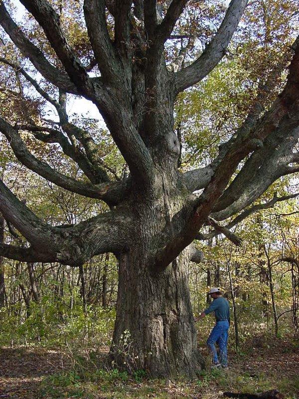 tante-tree-summer