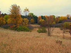 Princeton-McCune-Sand-Prairie