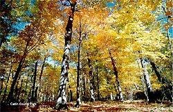 Ottawa-Catlin-County-Park